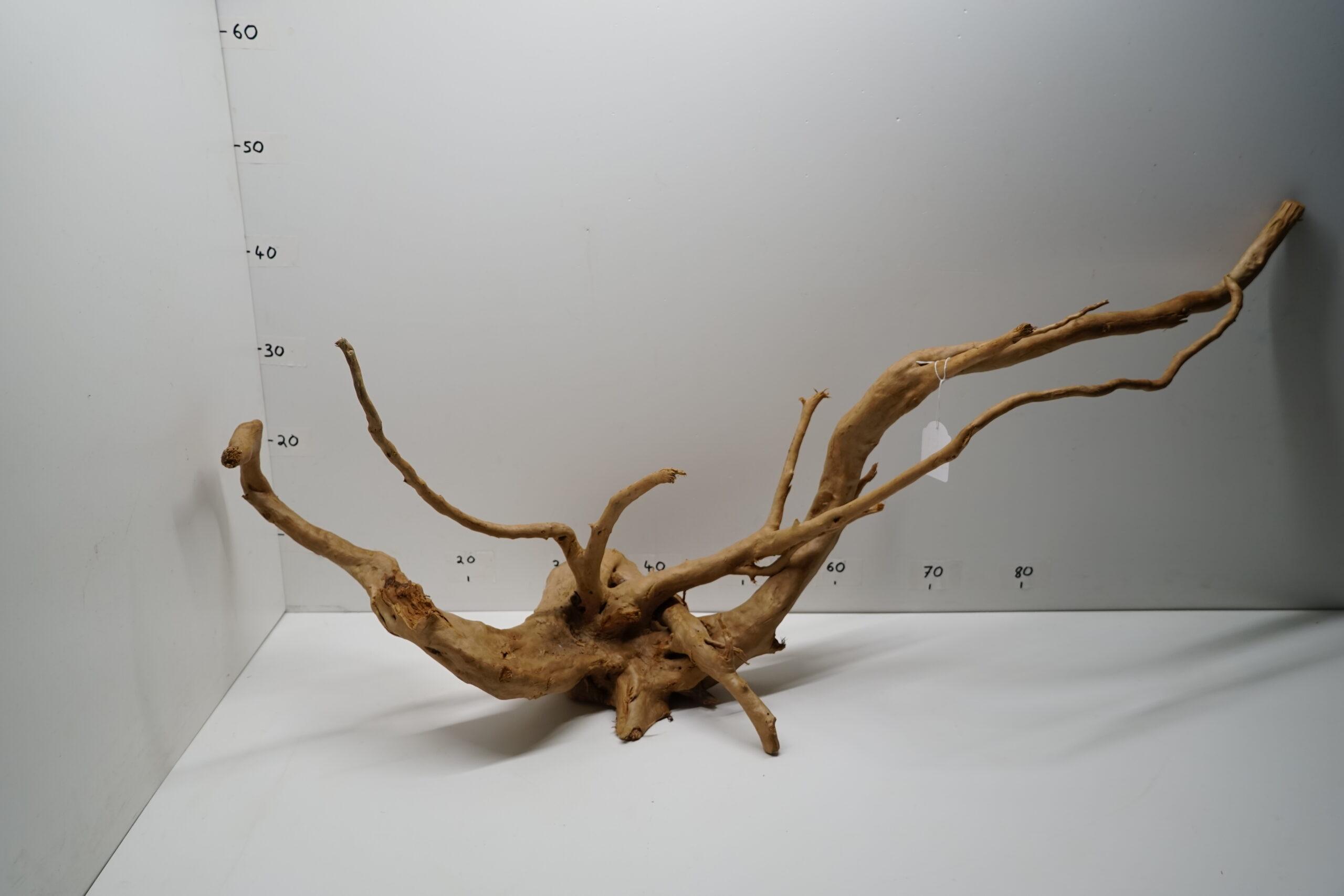 Moor Wurzel